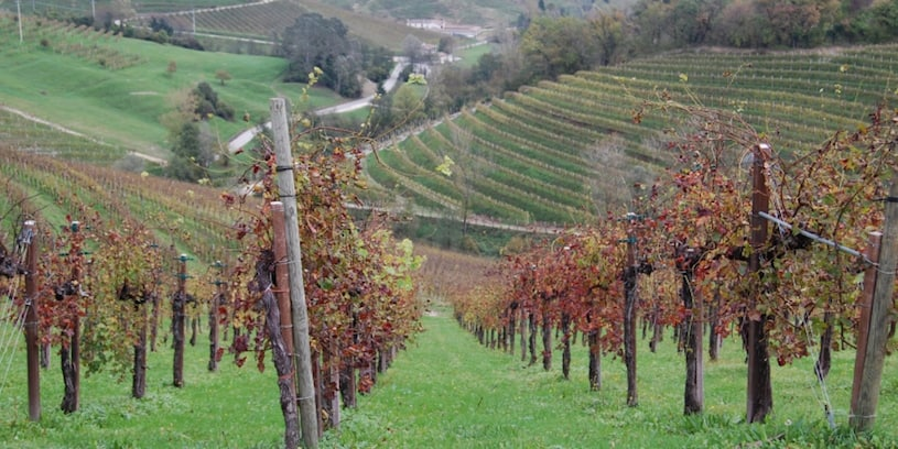 veneto sightseeing vineyard
