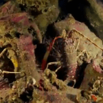 Ancient Roman Shipwrecks Reveal Roman Empire Trading Secrets