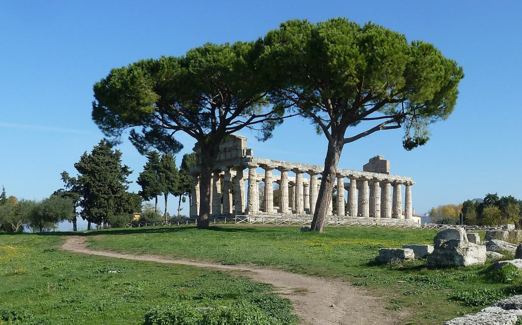 temple athena trees